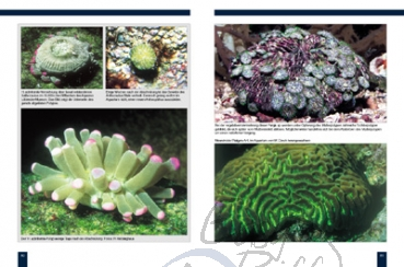 Meerwasser aquaristik shop easyriff steinkorallen im for Meerwasser aquaristik shop
